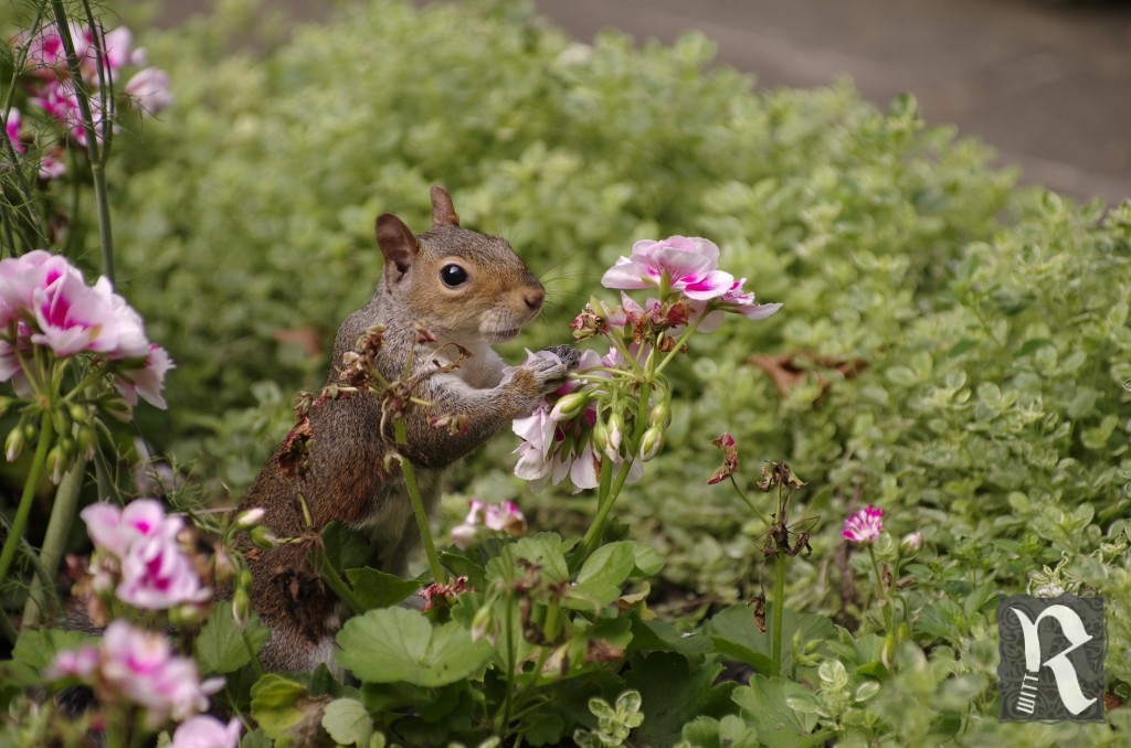 Salad Squirrel